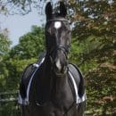 How to Manage at a Competition on Your Own How To Dressage