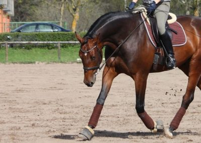 How to Work Your Horse Long and Low how to dressage