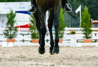 How to Keep Your Horse Balanced When Cantering Across a Diagonal how to dressage