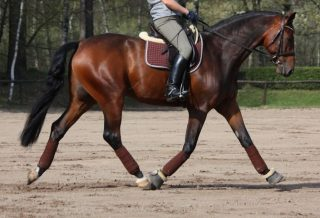 How to Keep Your Horse Straight how to dressage