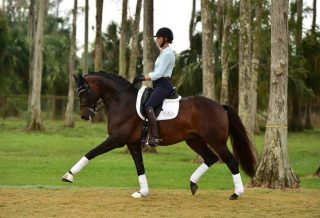 Interview with Grand Prix Dressage Rider Heather Blitz How To Dressage