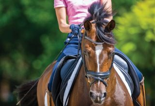 How to Keep a Consistent Rein Contact How to dressage