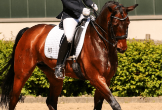 What is the Difference Between Bend and Flexion dressage
