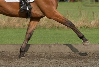 Why ALL Dressage Riders Need to Know The Scales of Training how to dressage