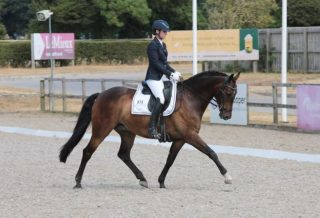How to Warm-Up Your Horse Correctly for a Dressage Competition how to dressage