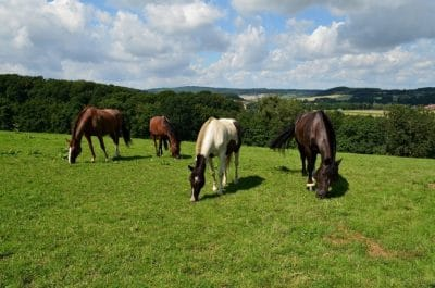 Plants That Are Poisonous to Horses how to dressage