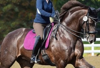 How to Improve Your Horse's Straightness and Collection dressage