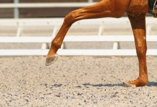how to create the ideal arena surface footing for dressage