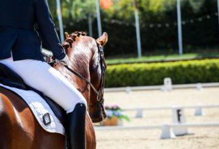 How to Improve Your Dressage Scores