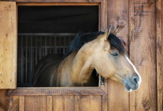 how to keep your horse happy when stabled