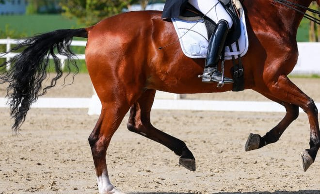increase horse's engagement dressage